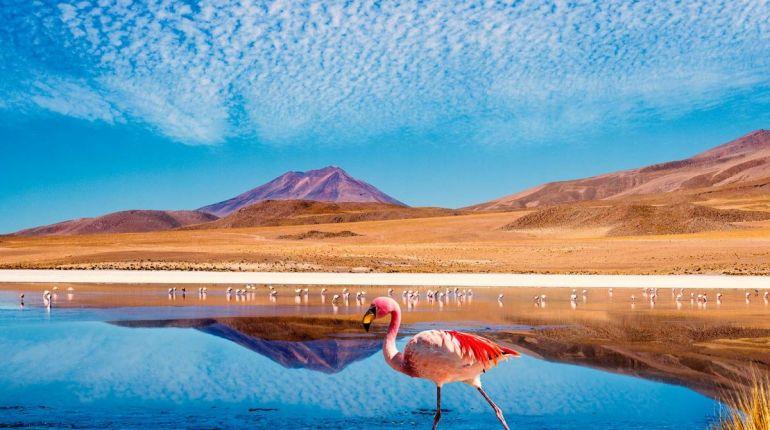 Deserto do Atacama & Salta